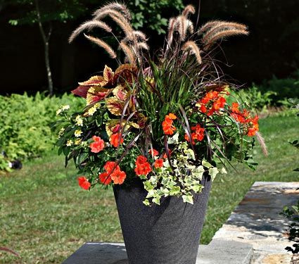 Petunia Potunia Papaya, Geranium Maverick Orange, Coleus ...