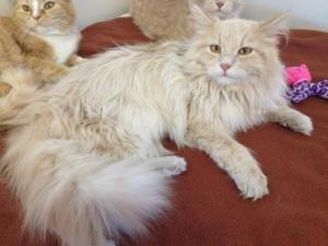 Adopt Wynonna On Katzen