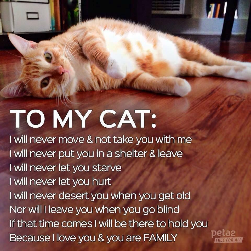 To My Cat I Will Never Let You Down Carson Cats Is In Need Of Fosters Even For Temporary Situations Please Save Lives Cats Cat Care Kitty