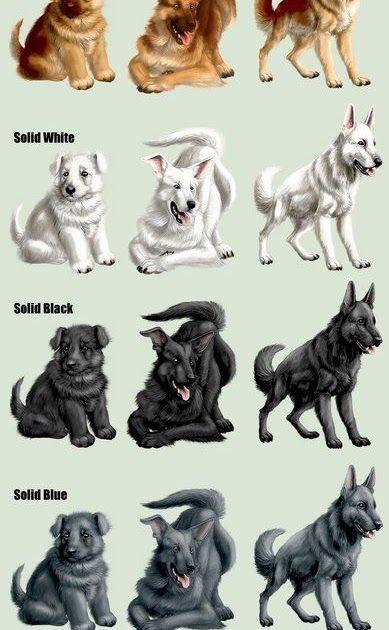 German Shepherd Dog Coat Colors Can We Say German Shepherd Dog