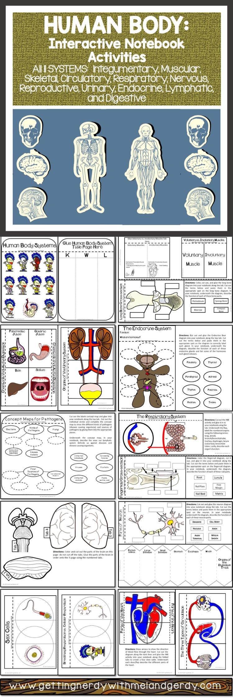 Human Body Systems Interactive Notebook Bundle Pinterest Body
