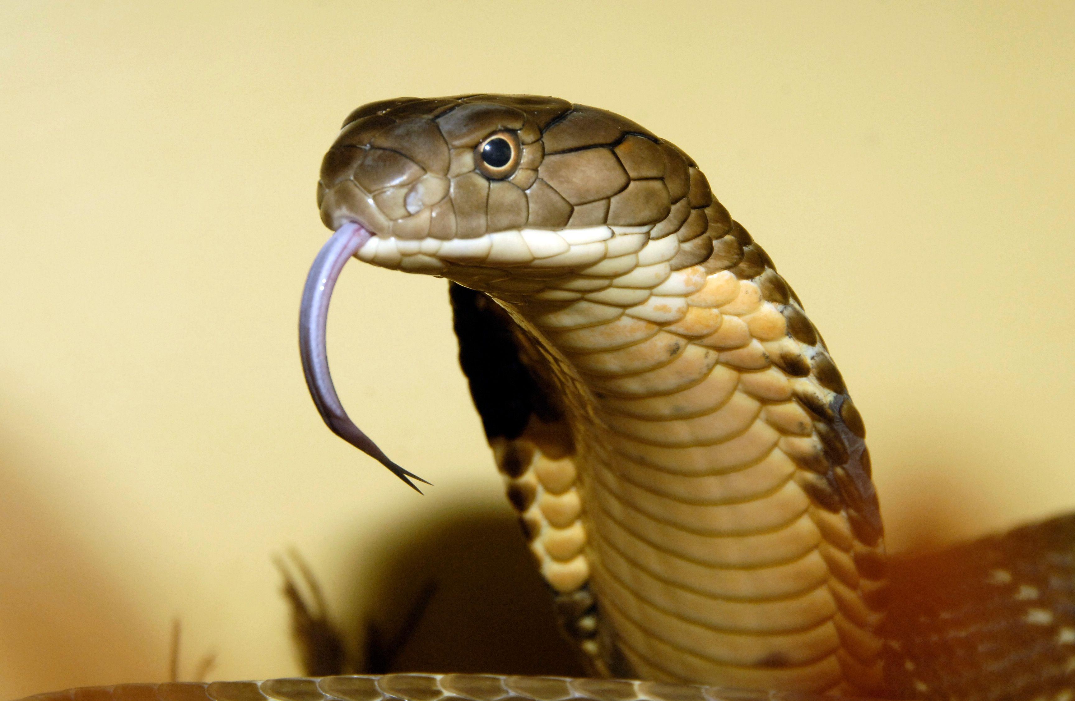 Resultado De Imagem Para National Geographic Snakes Photos Bronx Zoo Snake Water Mammals