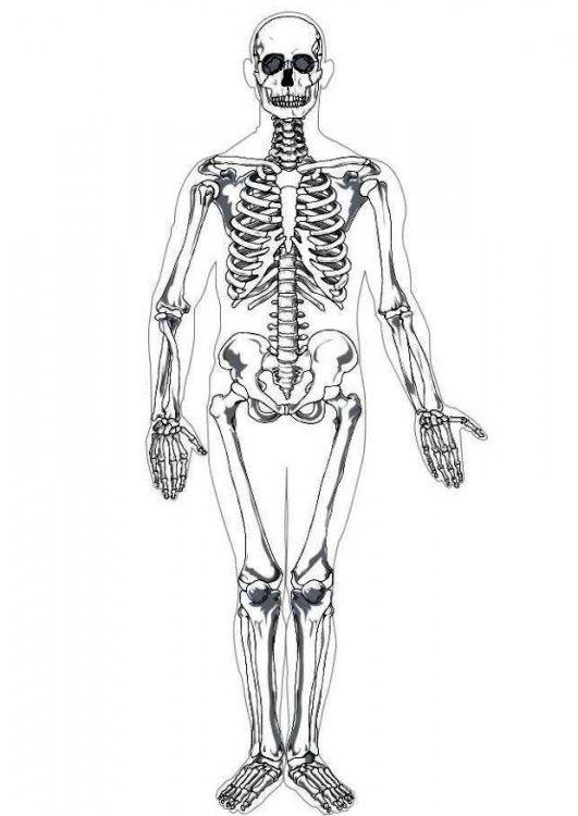 MEDICINA EN EL LENGUAJE DE LA GENTE: ANATOMIA HUMANA I: OSTEOLOGIA ...