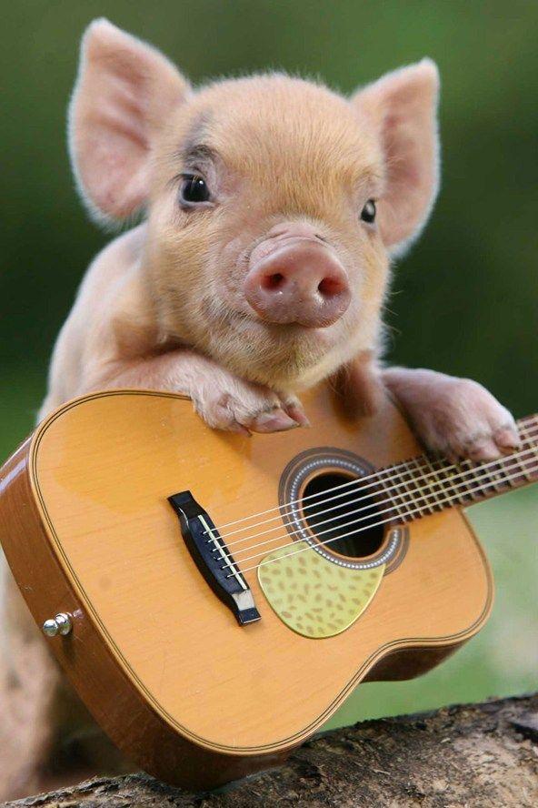 Singing Micro Pig How Cute Is That  Random  Teacup -7522