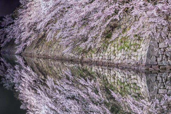 彦根城で撮影された水面に映り込む「夜桜」。その美しさに、うっとり見入ってしまう(写真4枚)|@Heaaart - アットハート