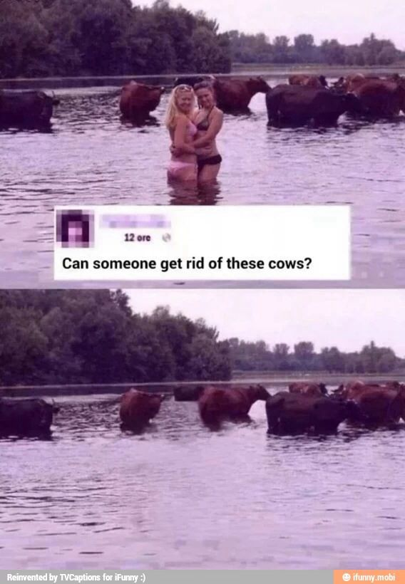 Cows xD