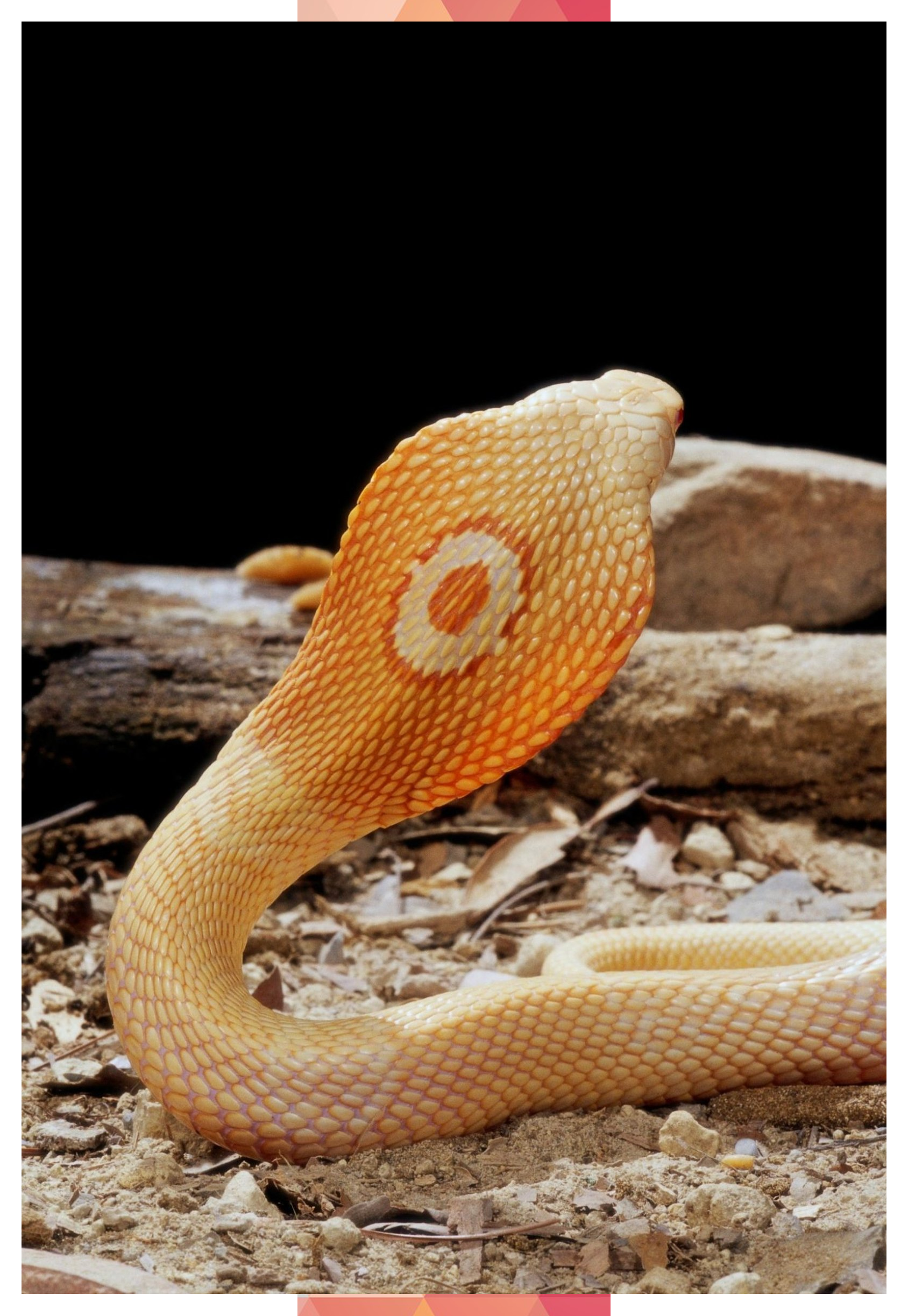 Photo of 18 Amazing Albino Animals #Albino #Amazing #animals