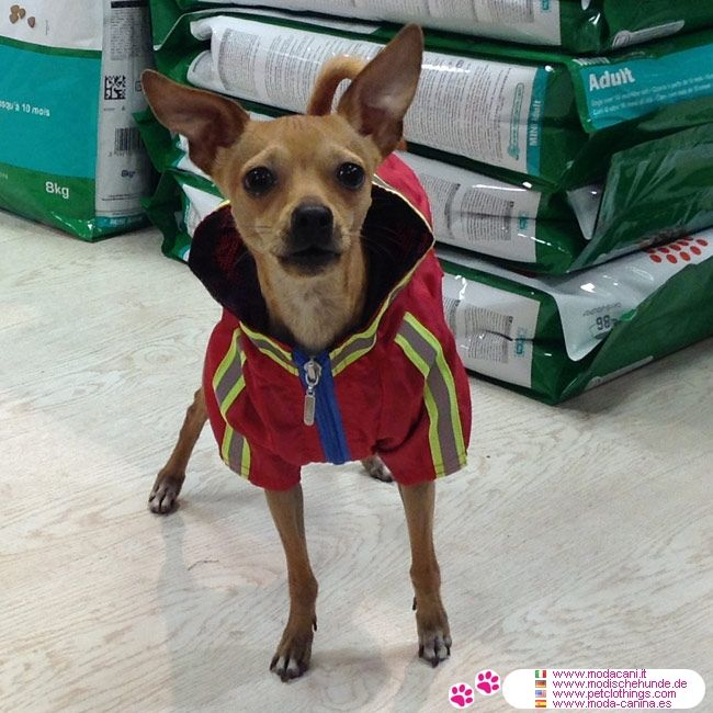 Impermeabile Rosso Per Cani Piccola E Media Taglia #ModaCani   Impermeabile  Con Cappuccio Per Cani