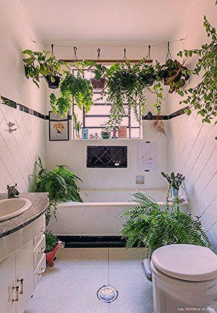 Living Room Decor Plants Kitchens 47 Best Ideas