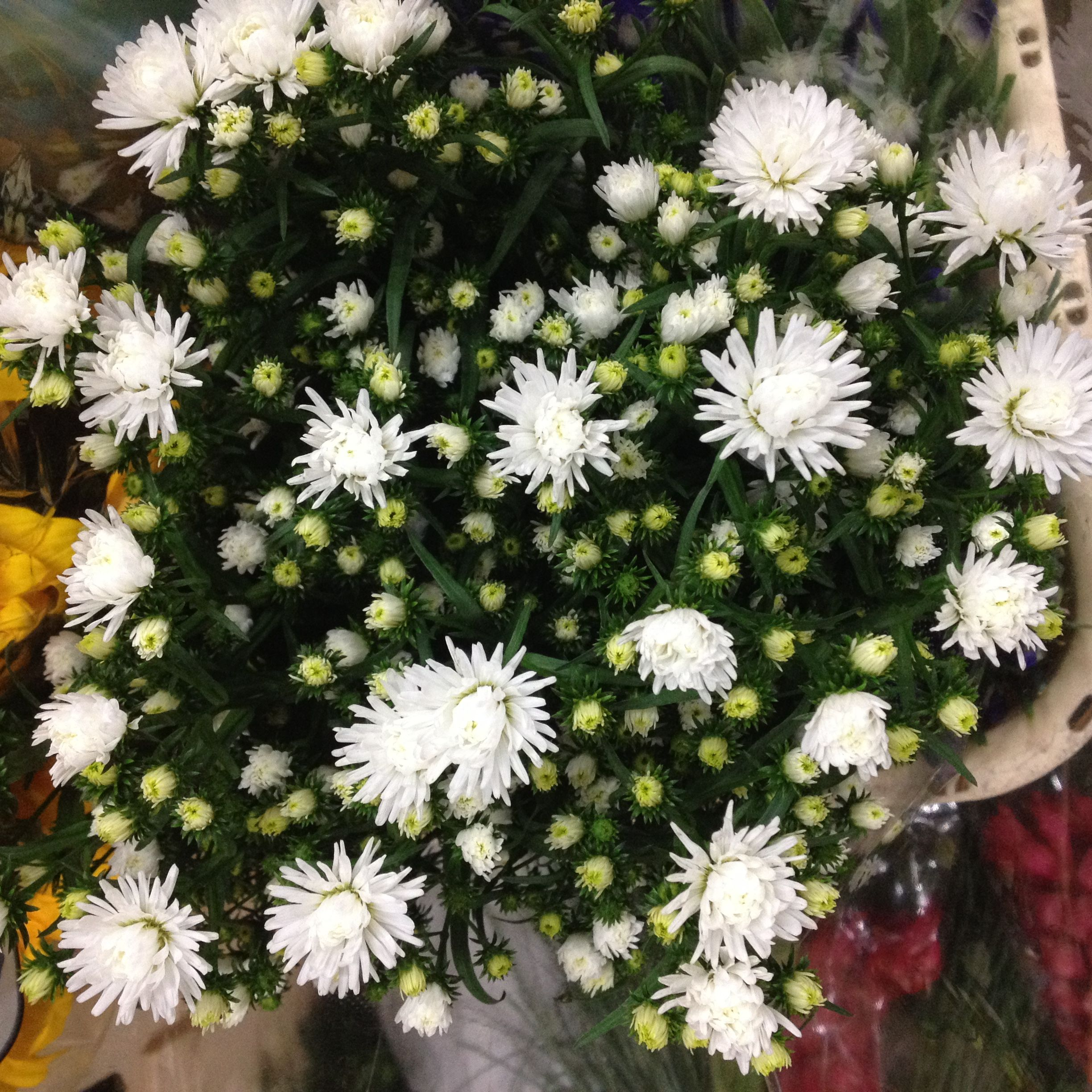 White Double September Flower Called Pretty Wendy Sold In Bunches Of 5 Stems From