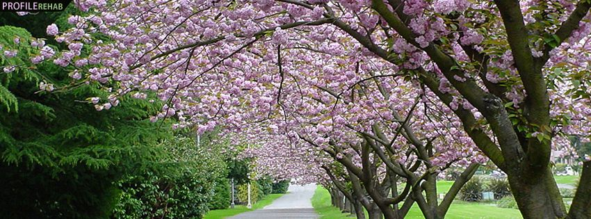 Pink Cherry Trees Timeline Cover for Facebook @ann ...