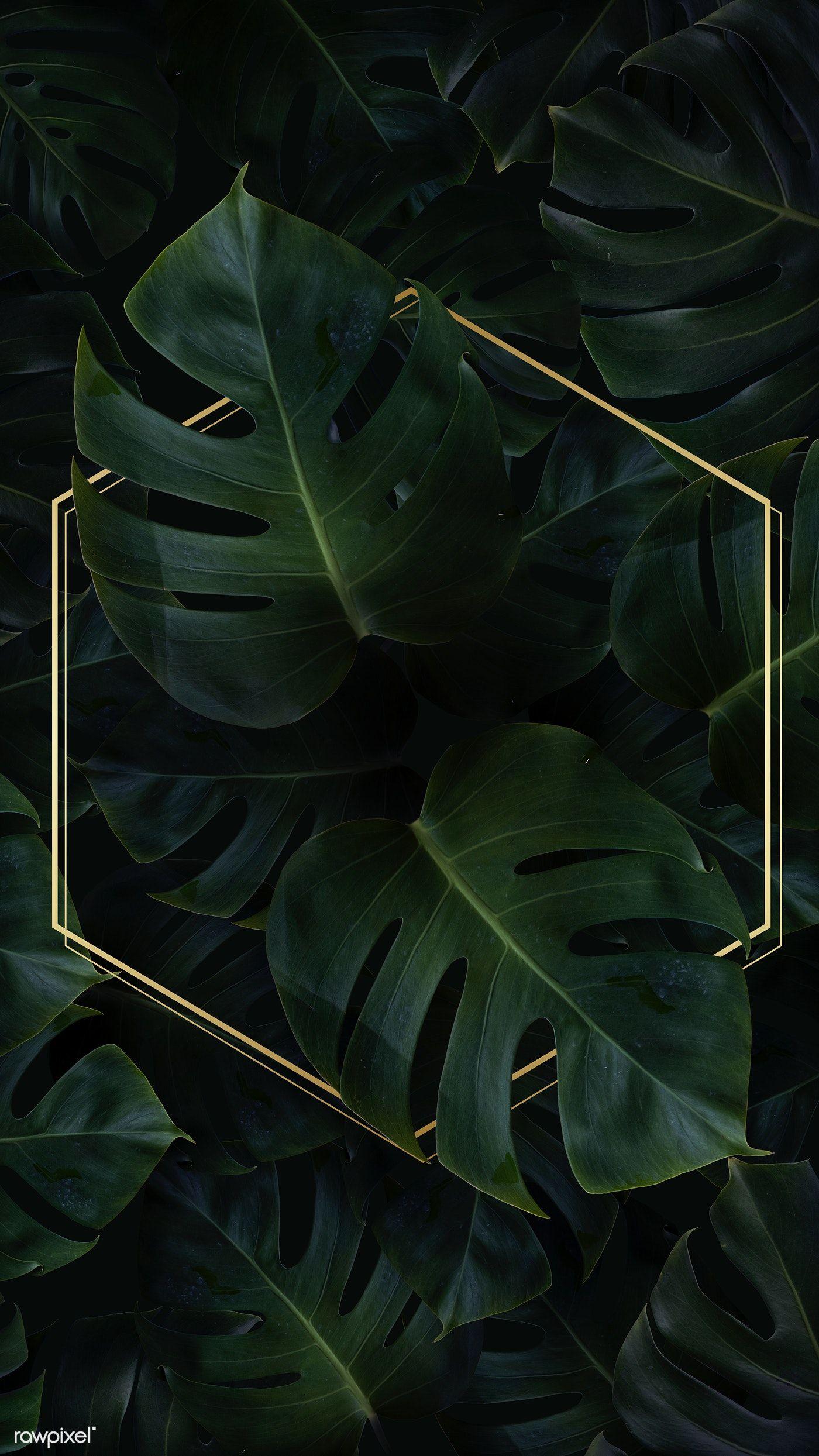 Download Premium Image Of Hexagon Golden Frame On A Tropical Background Tropical Background Backgrounds Phone Wallpapers Framed Wallpaper