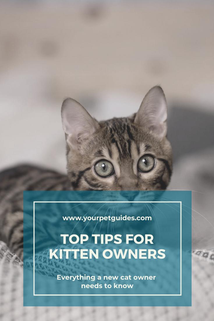 Kitten Care For New Owners In 2020 Kitten Care Cats Kitten Health