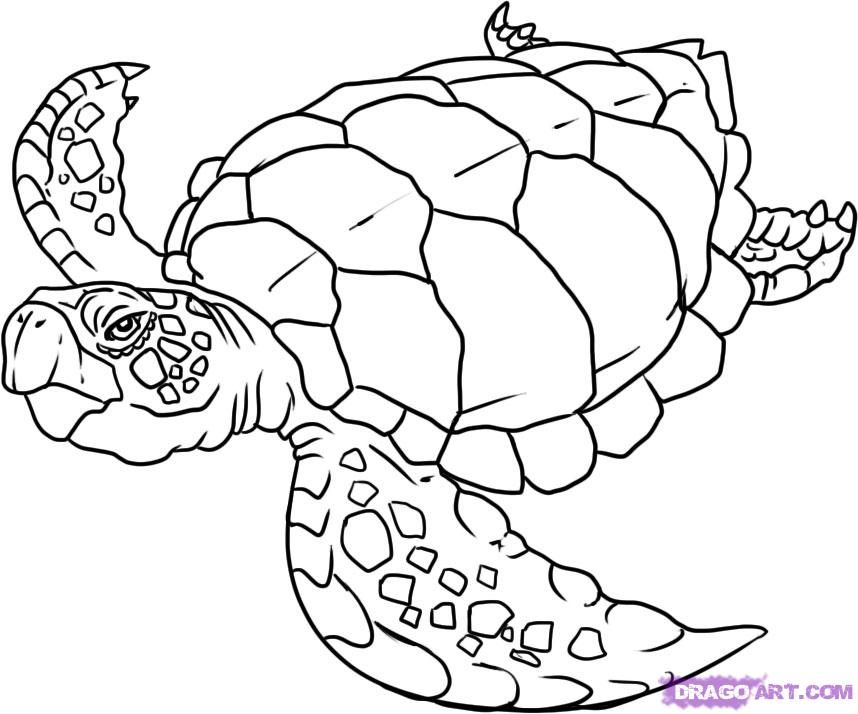 sea turtle drawing pictures | How to Draw a Turtle, Step by Step ...