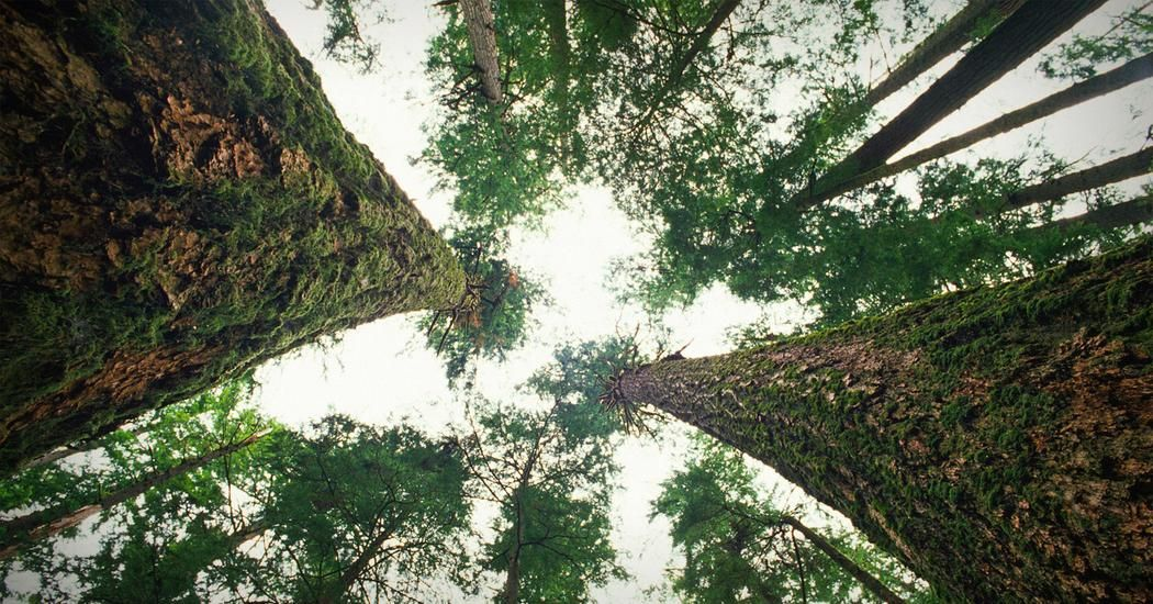 Suzanne Simard How Trees Talk To Each Other Ted Talk Subtitles And Transcript Ted Tree Natural World Canadian Forest