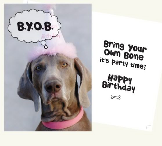 creative dog birthday cards Yahoo Search Results Yahoo