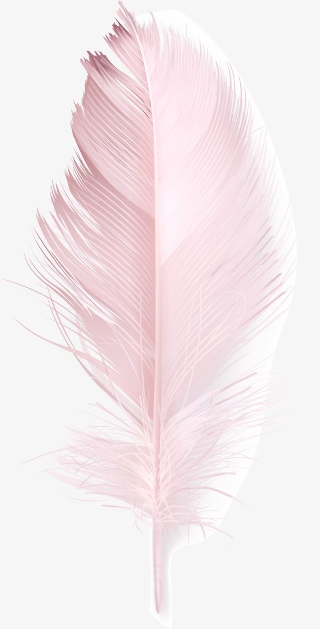 Pink Feather, Feather Clipart, Pink, Feather PNG Transparent Clipart Image and PSD File for Free Download