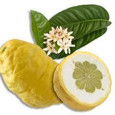 Le Cedrat Est Un Agrume Qui Ressemble A Un Gros Citron Son Ecorce