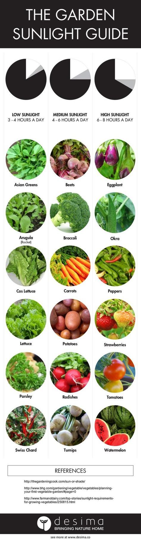 Photo of Infographic on veggies you can grow again  Have you tried doing any of these, wh…