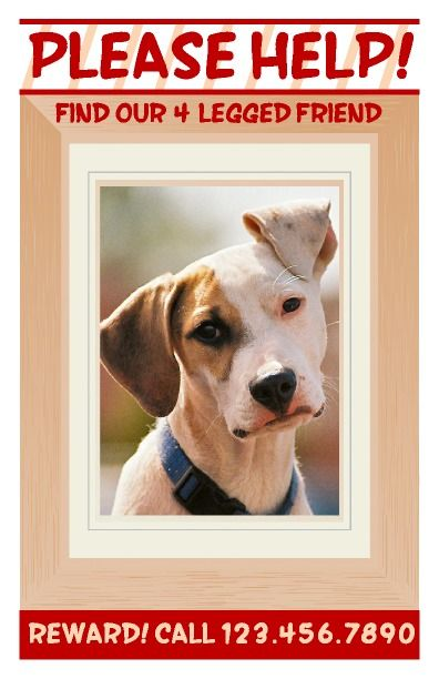 Lost Pet Poster. Features a place for a large picture that can be ...