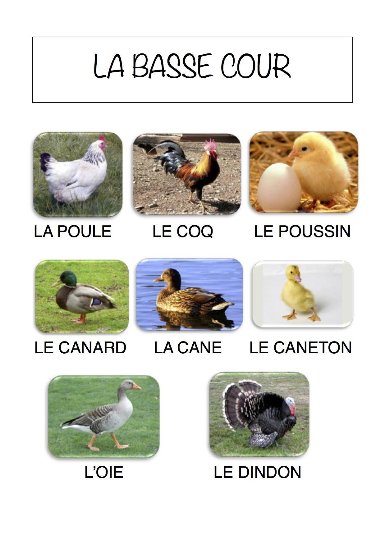 Vocabulaire de la ferme imagier simple pour la maternelle - Imagier animaux de la ferme ...