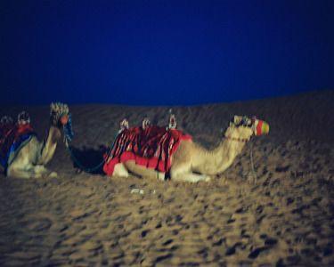 """Saatchi Online Artist Angela Hechtfisch; Photography, """"Welche Gesellschaft könnte heiterer sein als die inmitten von Kamelen? 02"""" #art"""