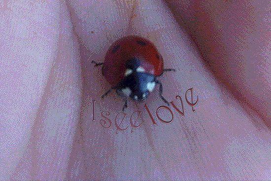 I see love...