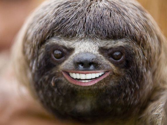 Pin By Bzzagent On Wat Sloth Cute Sloth Pictures Funny Animals