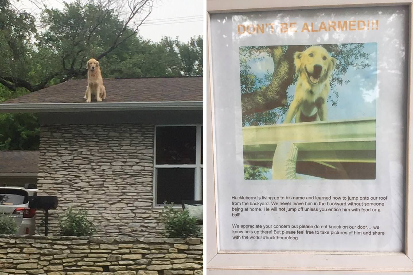This Dog Has A Thing For Rooftops Apparentlyhttps I Imgur Com