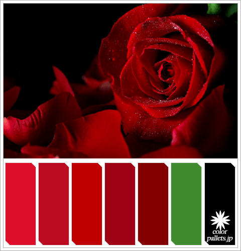 Red Rose Colorpallet Hues and Tones
