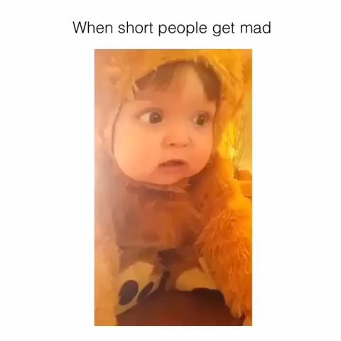 humor-videos