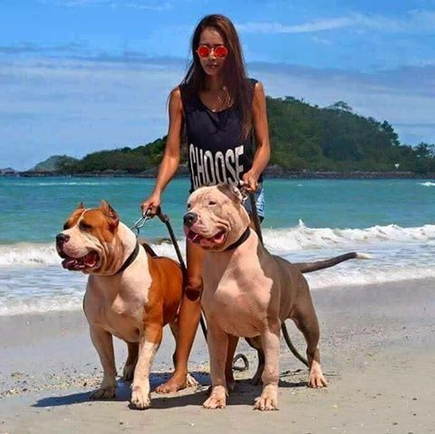 Xxl So Big Animals That I Love Pitbulls Dogs Bully Dog