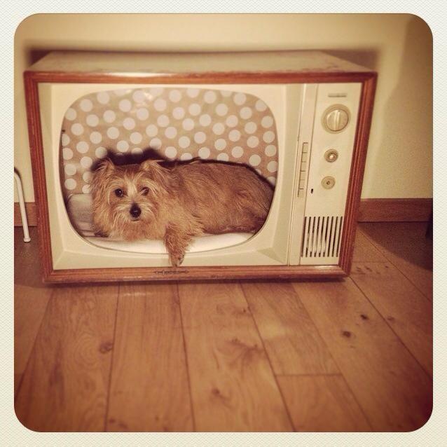 Vintage Tv Dog Bed Tv Dog Beds Dog Bed Vintage Tv