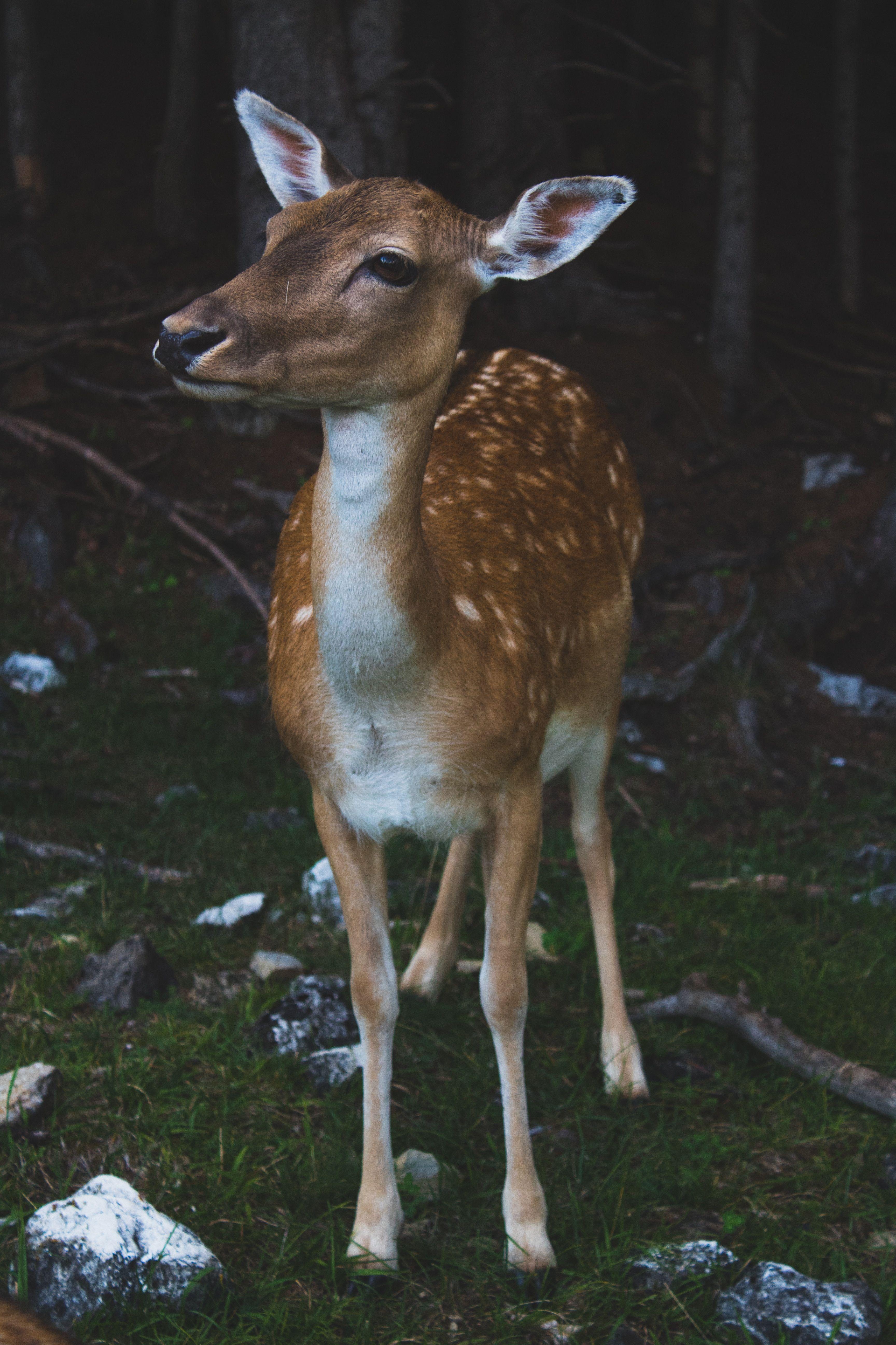 Deer Aging Plaque wildlifeenterprises in 2020