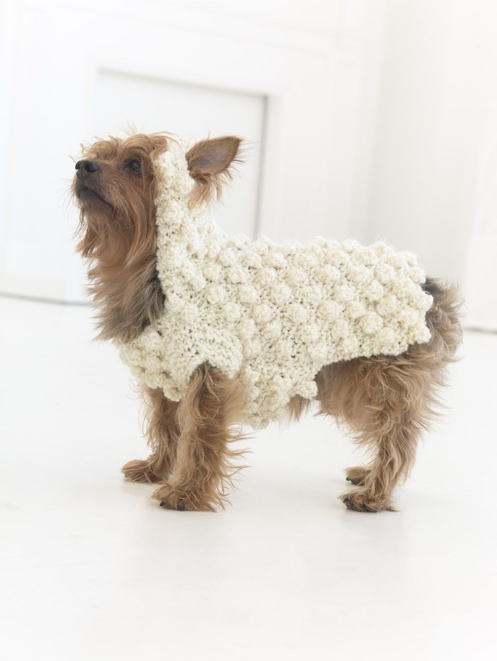 Year Of The Sheep Sweater (Knit) | Dog sweaters | Pinterest | Gato