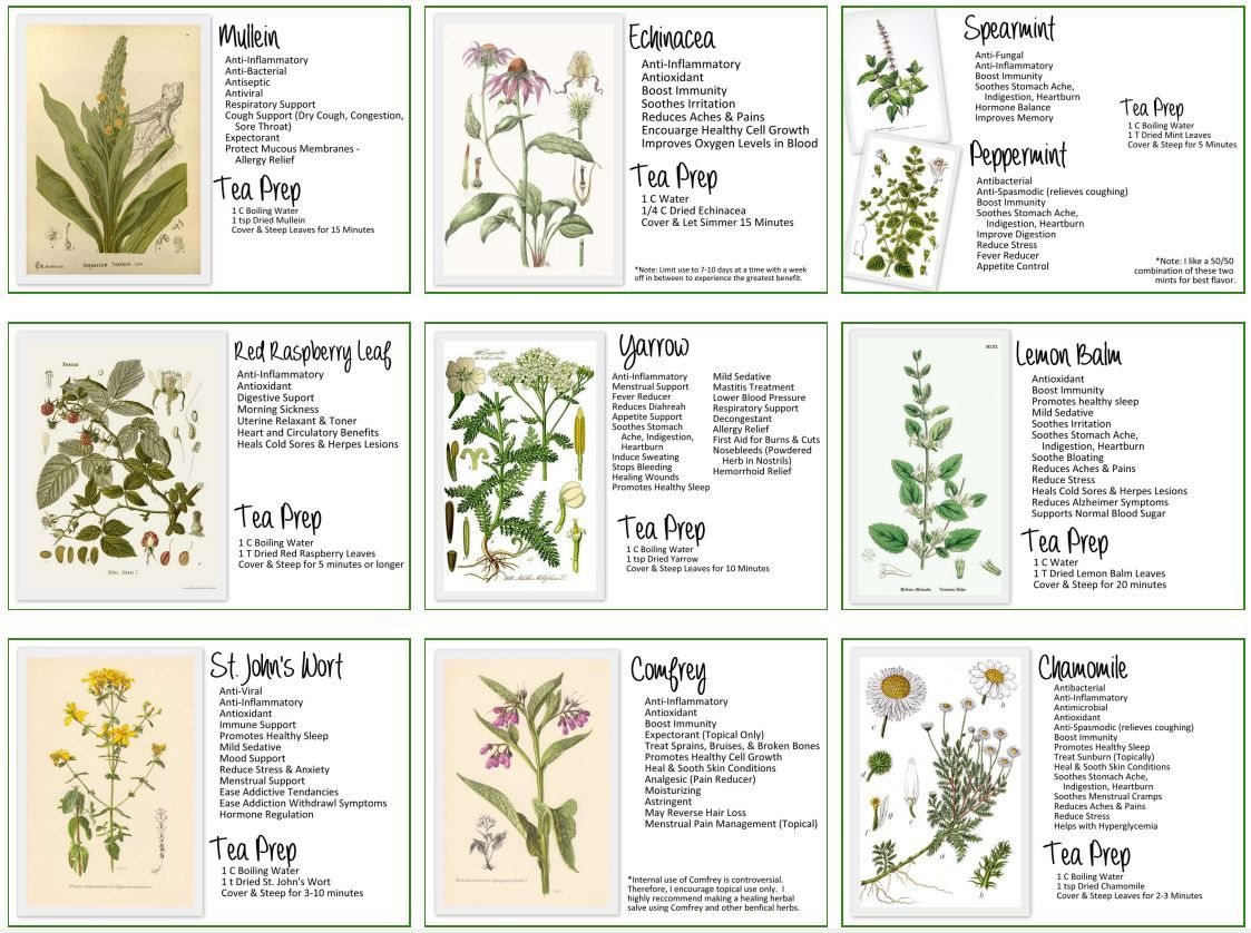 My Herbal Medicine Cabinet Cheat Sheet