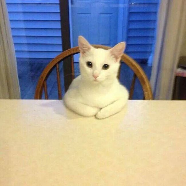 Cat Sitting At Table Funny Animal Memes Funny Cat Videos Funny Cat Memes
