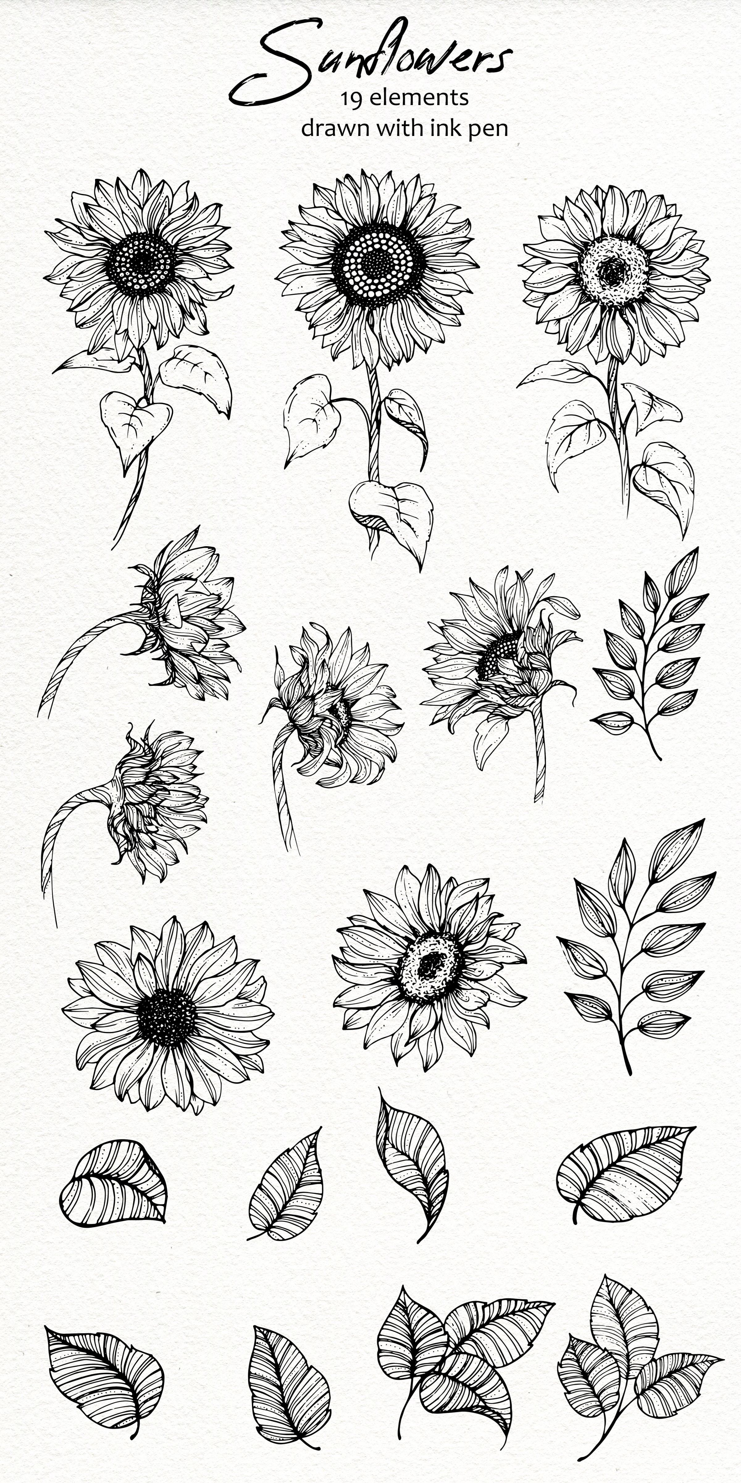 38+ Sunflower plant clipart black and white ideas in 2021