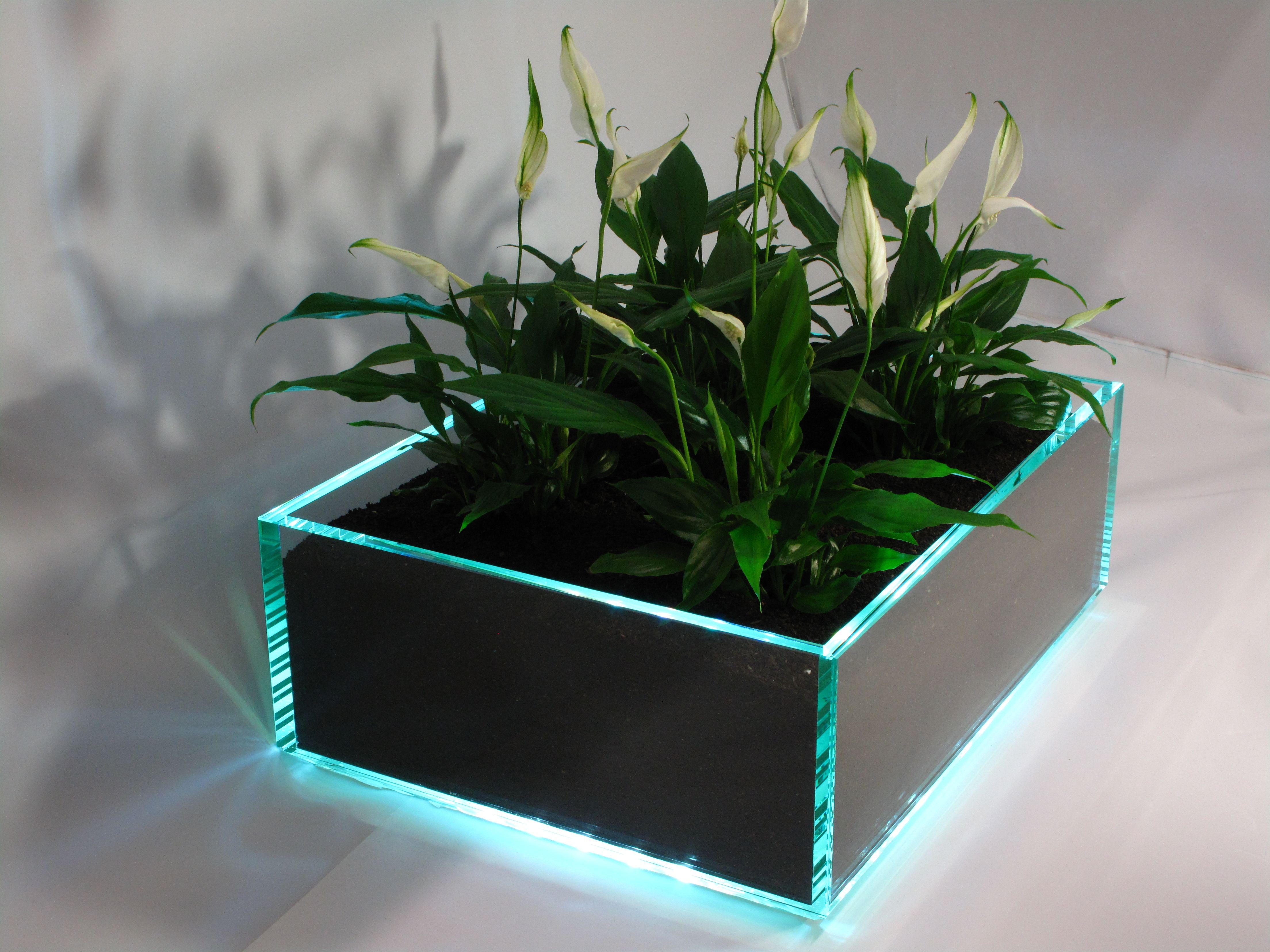 Blumenkasten Aus Glas Mit Led Beleuchtung Fertigungsgrossen Nach Kunden Wunsch Glasvitrine Glas Glashaube
