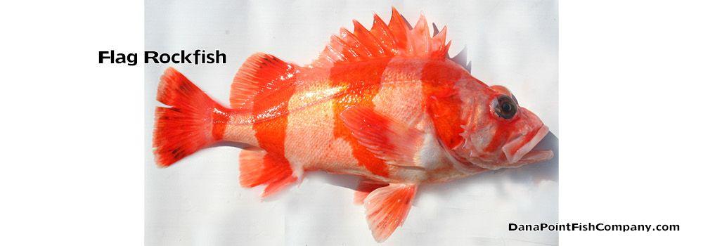 Pin On Fish Id