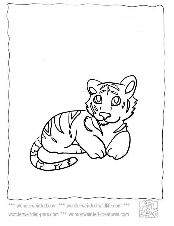 Baby Tiger Coloring Pages,Echo\'s Cute Tiger Coloring Pages For Kids ...