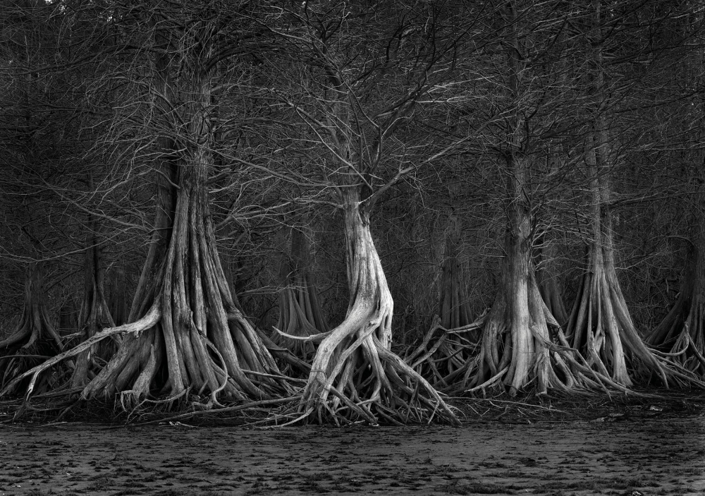 Against All Odds, Caddo Lake Prevails | Texas Highways in ...