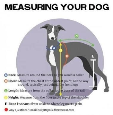 Italian Greyhound Clothes Crochet Patterns Google Search