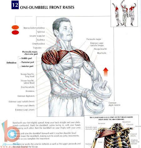 تمارين رياضية لتقوية عضلات الظهر والكتفين بالصور