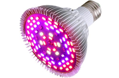Top 10 Best Led Grow Light Bulbs For Indoor Plants Reviews 640 x 480