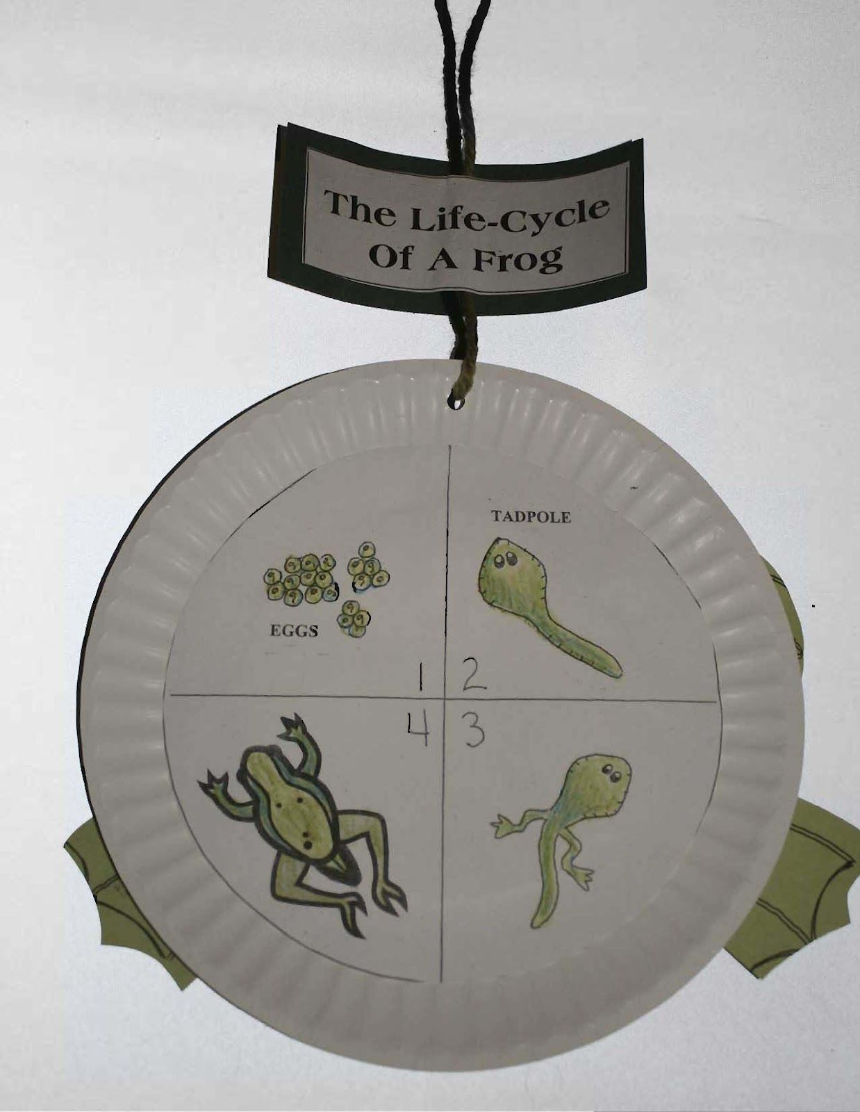 Frog life cycle frogs pinterest frog life cycle robcynllc Gallery