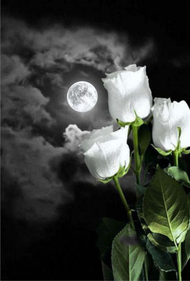 Pin By Mahesh Espoo On Anjali Pinterest Moon Flowers And