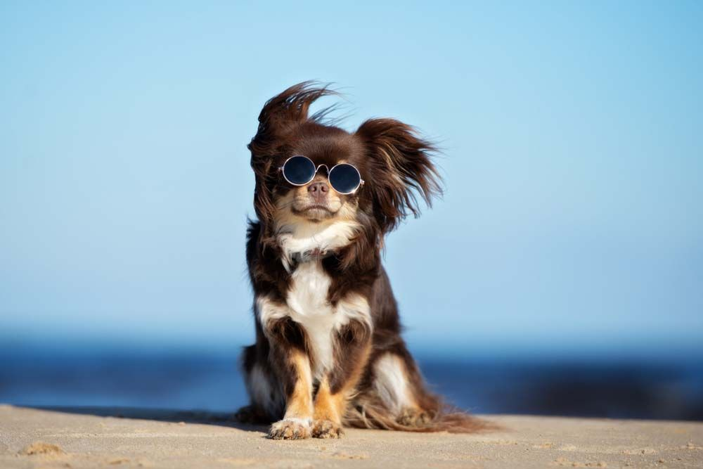 30 Most Popular Dog Breeds Known All Over The World Most Popular