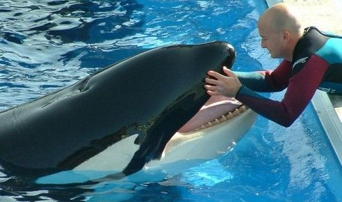 4 year biology degree inspiration marine-mammal-trainer-jobs Dream - marine biologist job description