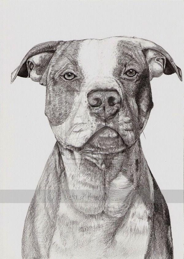 American pitbull terrier by IviiK on DeviantArt | perros ...
